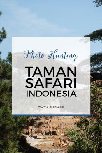 Hunting Foto Binatang di Taman Safari Indonesia Cisarua 2015