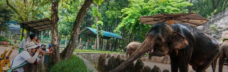 Sumber foto: http://ragunanzoo.jakarta.go.id/